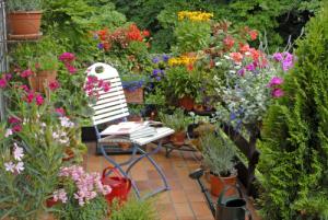 garden on a terrace